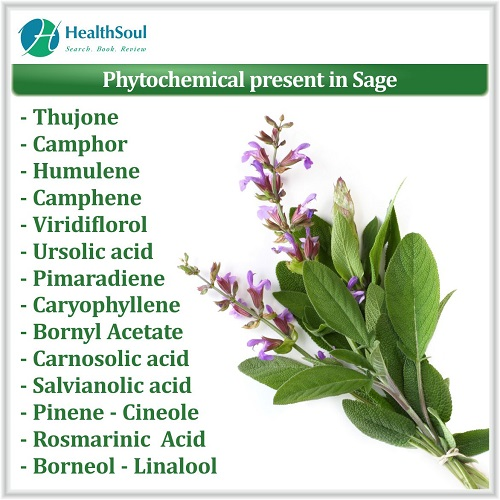 Phytochemical present in Sage | HealthSoul